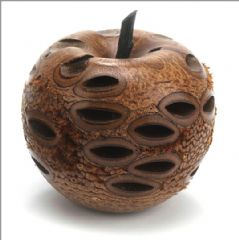 Natural Banksia Nut apple